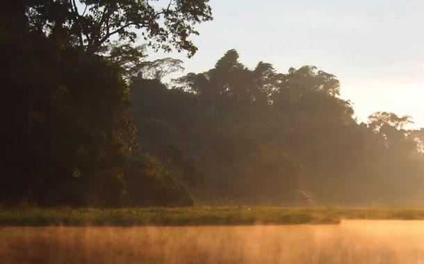 정글 속의 빛줄기