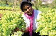 2,000가정에 수익을 안겨 준 마다가스카르의 채소 농장